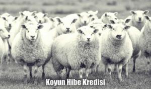 Koyun almak için kredi devlet destekli hibe
