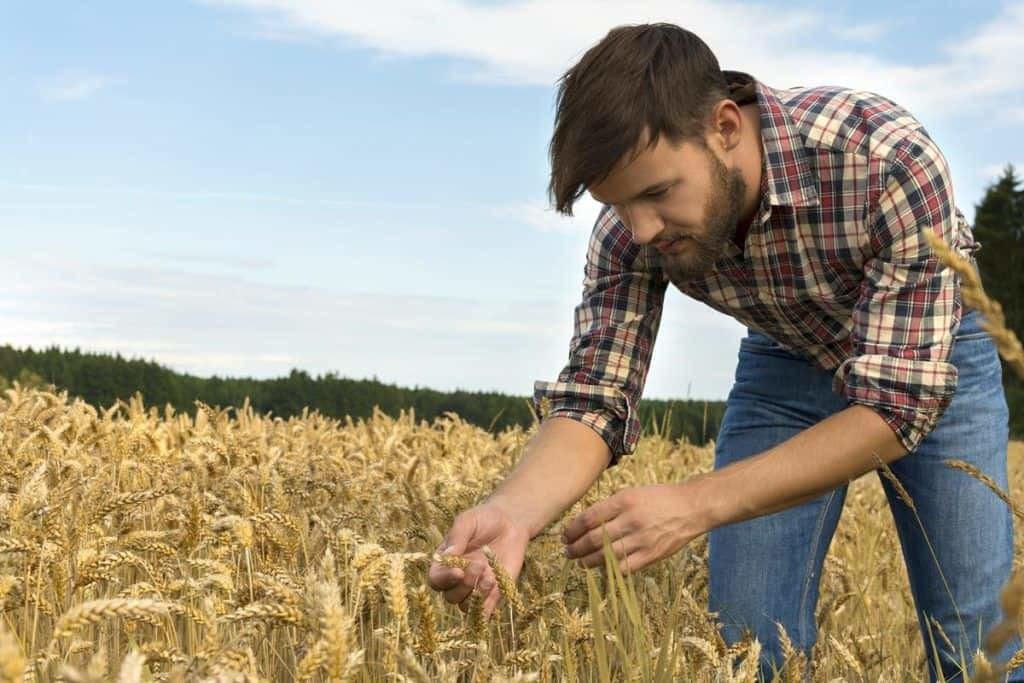 Genç Çiftçilere 50 Bin Lira Hibe Desteği Nasıl Alınır?